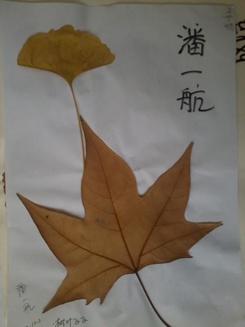 用树叶做的房子手工贴画图片展示